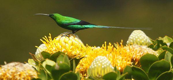 bird feeding and cross pollination