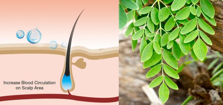 moringa leaf powder for hair growth