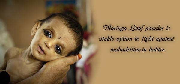 moringa for babies
