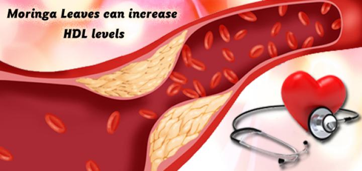 moringa for cholesterol