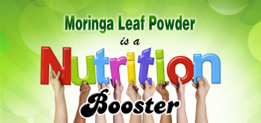 moringa for diet