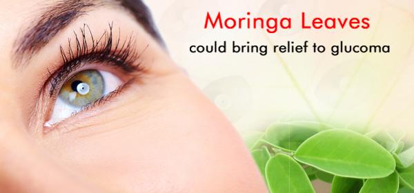 moringa for glaucoma