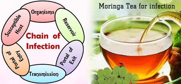 moringa for infections