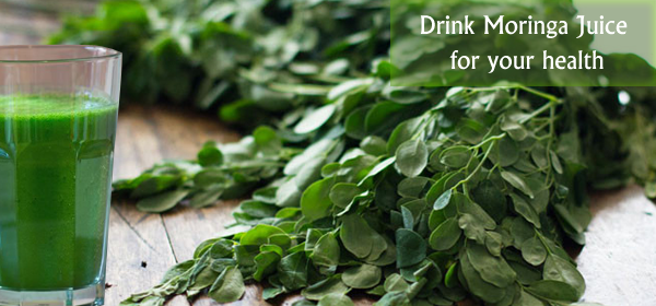 moringa for juicing