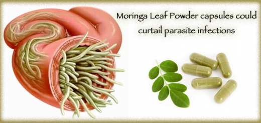 moringa for parasites