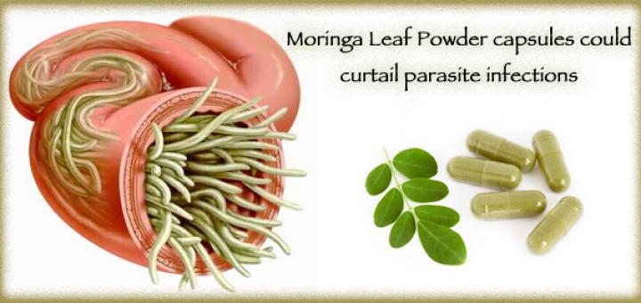 moringa for parasites